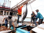 Vietnam tuna exports exceed yearly target