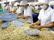 Vietnam, Cambodia to develop cashew farming area