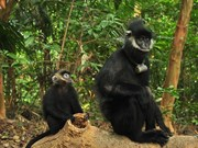 Quang Binh rangers detain man with two dead langurs