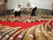 China police seize ivory smuggled via Vietnam border