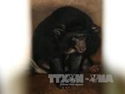 Six Tibetan bears in Binh Duong rescued
