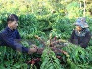 Nat'l project seeks to improve coffee quality, develop premium brand