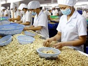 Vinacas develops 1-million-tonne cashew material region in Cambodia