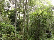 Thailand: FIO to expand economic forests by 15 percent
