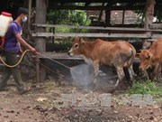 Vietnam to produce foot-and-mouth disease vaccines next year