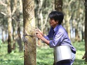 Vietnam Rubber Group's equitisation plan approved