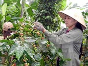 Agriculture sector targets 40 billion USD in export turnover