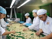 Vietnam helps Cambodia increase cashew output