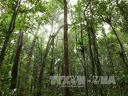 Central Highlands region promotes sustainable forest management