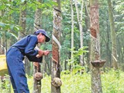 Vietnam Rubber Group to launch IPO in early February