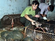 Illegal transport of 114 pangolins found in Ca Mau