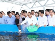 High-tech shrimp farming area constructed in Bac Lieu province