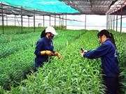 Japan helps develop organic agriculture in Ben Tre