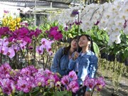 Delta's colourful Sa Dec flower village