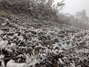 Mu Cang Chai blanketed in ice for third time in one month