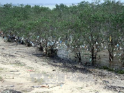 Vietnam seeks new approaches to natural resource preservation