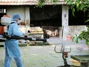 UK helps Vietnam forecast dengue fever epidemic