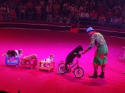 First international circus gala opens in HCM City