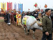 Annual ploughing festival opens in Ha Nam province