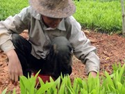 Lang Son launches tree-planting campaign