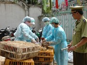 Hai Phong culls 3,000 bird-flu affected poultry