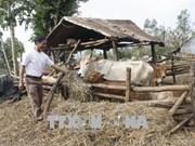 Gia Lai focuses on socio-economic development in ethnic areas
