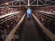 Animal health agency warns of possible new bird flu outbreaks