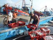 Coastal localities report bumper fishing catches