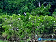Bac Lieu bird sanctuary faces high risk of fires