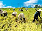 Vietnam, Netherlands to boost agricultural cooperation