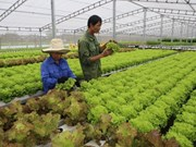 Project helps farmers in Son La increase incomes