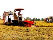 VnSAT helps promote sustainable rice farming in Tien Giang