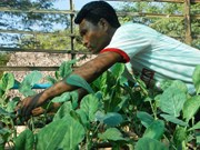 IFAD helps Myanmar improve farmers' income