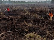 UN praises Indonesia's efforts to restore peatlands