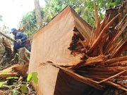 Illegal logging discovered in central Quang Nam province