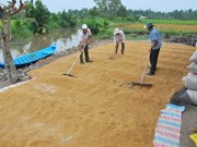 Import demand continues boosting Vietnam's rice export