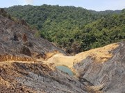 Vietnam's forest coverage ratio reaches over 41 percent: MARD
