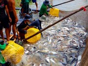 Numerous difficulties challenge tra fish export