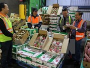 Vietnam's fruit, vegetable exports up 33.4 percent in Q1
