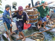 Three-tier cooperation plan to boost tra fish quality approved