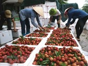 Vietnam targets 10 billion USD from fruit, vegetable exports
