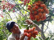 Vietnam exports rambutan to New Zealand