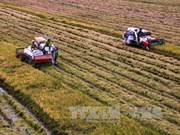 Sustainable agro-project benefits 27,650 farmers in Can Tho