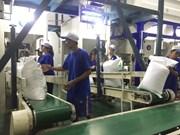 Vietnam rice exports notch volatile in Q1