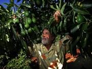 Vietnam, Mexico seek partnership in food industry