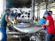 EC delegation to inspect IUU fishing in Vietnam