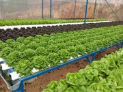 HCM City to get high-quality farm products from Long An