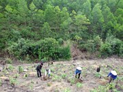 Additional 40,720 hectares of forest planted in northern region
