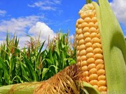 First direct shipment of US corn arrives in Vietnam