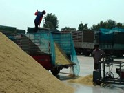 Thailand to expand rice markets in Malaysia, Indonesia